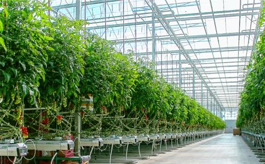 Greenhouses farm