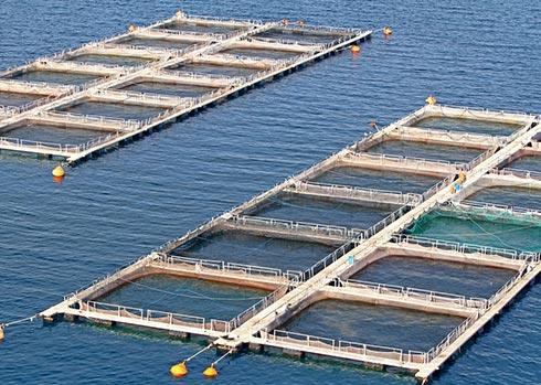 دراسه الجدوي مزرعة استزراع سمكي باستثمار 2.750 مليون دولار