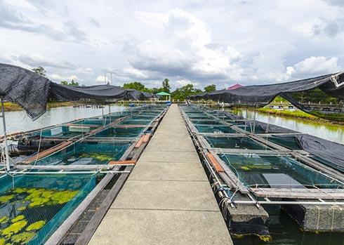 دراسه جدوي مزرعة لتربية وتسمين الأسماك باستثمار 5 مليون دولار