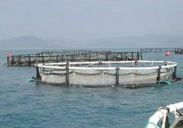 دراسة جدوى مشروع المزارع السمكية باستثمار  14,5 مليون دولار .