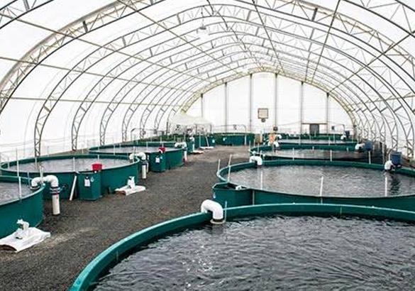 دراسة جدوى مشروع الاستزراع السمكي باستثمار  24 مليون دولار .