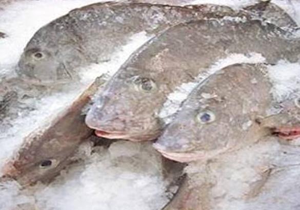 دراسة جدوى منفذ بيع الأسماك المجمدة باستثمار 258 ألف دولار