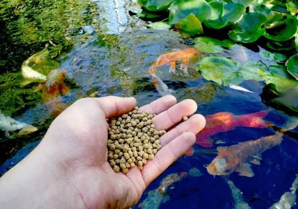 دراسة جدوى إعادة تدوير بقايا الطعام لإنتاج طعام السمك برأس مال 1.7 مليون دولار