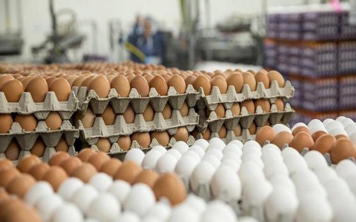 مشروع الديوان لإنتاج البيض